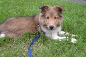 Force Free Fido: Puppy Socialization, Manners and Obedience Training in Concord, NC